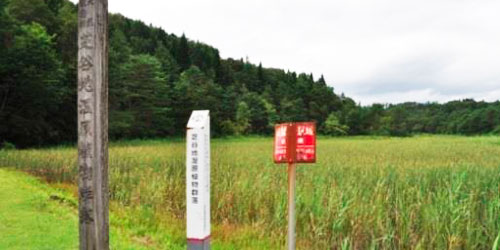 Shibayachi Wetland Plant Communities